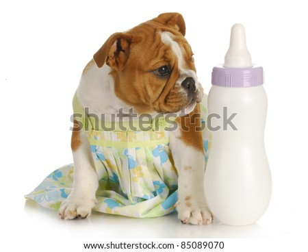 bottle feeding puppy - english bulldog sitting beside baby bottle - stock photo