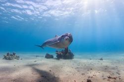 bottle nose dolphin Eilat, Israel