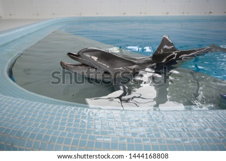 Bottle-nosed dolphin poses in the pool sea water. positive emotions, communication with marine mammals #1444168808