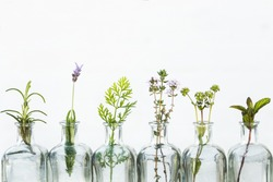 Bottle of essential oil with herbs lavender flower, rosemary ,flower of  canons,thyme and peppermint set up on white background.