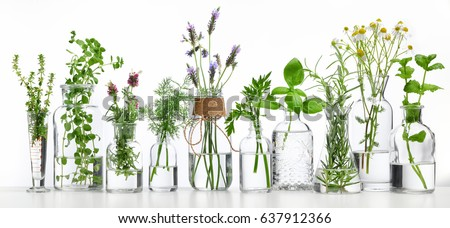 Bottle of essential oil with herbs on white background