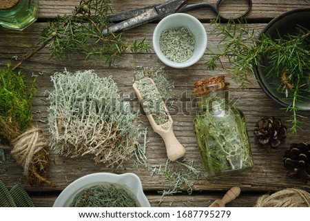 Bottle of healthy tincture of moss, mortars of dried moss, Reindeer lichen,  healthy common haircap moss and juniper twigs on wooden board. Herbal medicine.