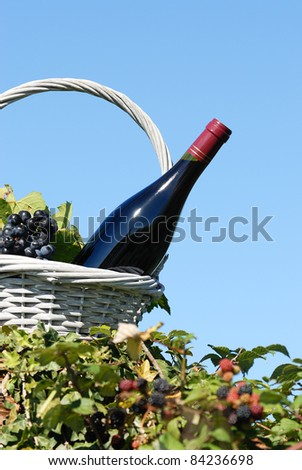 Bottle of red wine and grapes in basket