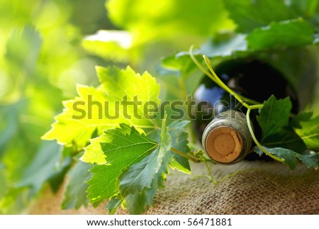 Bottle of red wine and leaves.