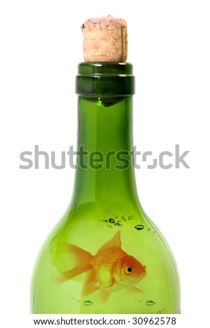 Bottle of wine and goldfish  isolated over white background