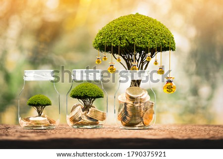 Bottle with gold coin and money bag of tree with growing put on the wood on the morning sunlight in public park, Saving money and loan for business investment concept. Stock photo ©