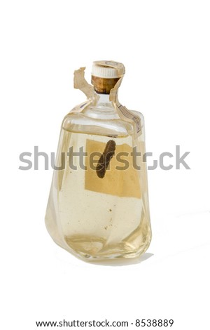 Bottle with strong mexican alcohol Mezcal with worm in it Delicacy in Oaxaca in southern Mexico. Worm is eaten as a delicacy. - stock photo