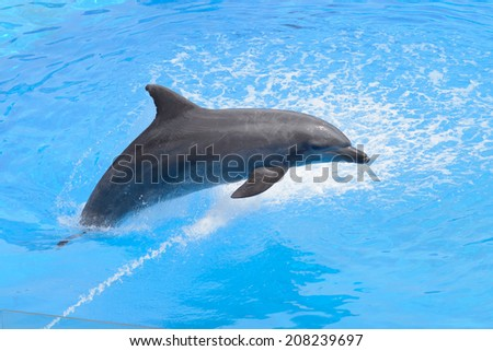 Bottlenose dolphin jumping from blue water #208239697