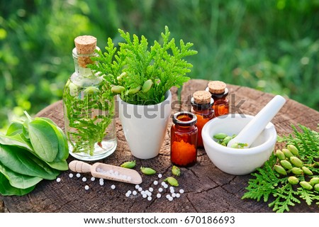 Bottles of homeopathic globules, Thuja occidentalis, Plantago major drugs and mortar. Homeopathy medicine. Stock photo ©