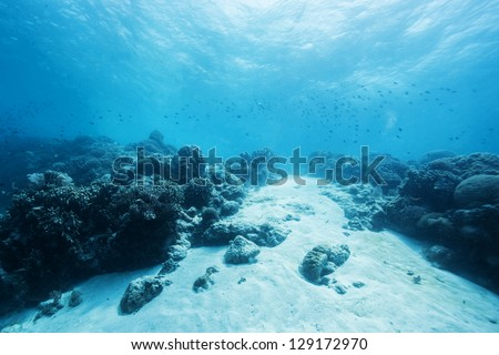 bottom of the ocean #129172970