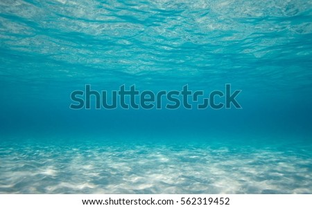 Shutterstock bottom of the sea