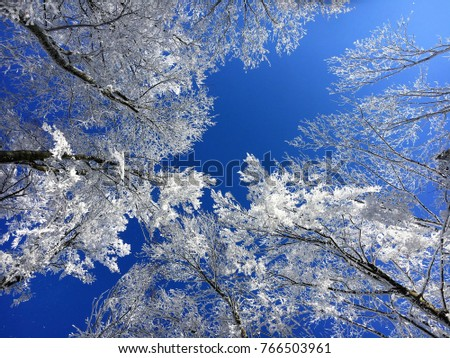 Stock Photo Bottom up view of white snow and frost covered treetops against beautiful blue winter sky