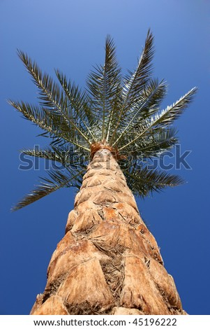 dates trees pictures. makeup makeup date palm tree