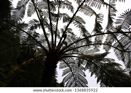 Bottom view of hay-scented fern tree silhoette with beautiful branches and leaves. Prehistoric form of life #1368835922
