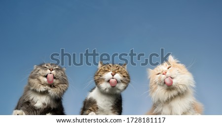 bottom view of three cats licking invisible window glass in front of clear blue sky in the background with copy space Foto stock ©