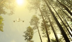 Bottom view through the trees in the forest to the plane in the sky and the sun