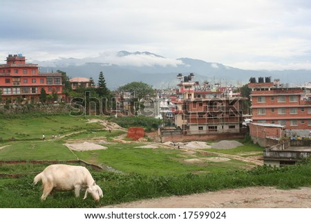 Boudha, Kathmandu, Nepal.  View of residential area with fields and livestock throughout community.