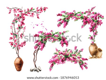 Bougainvillea flower arch, decorative elements set, Hand drawn watercolor illustration isolated on white background