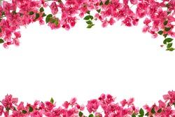 Bougainvillea flower frame on white background ,Provincial flower of phuket thailand