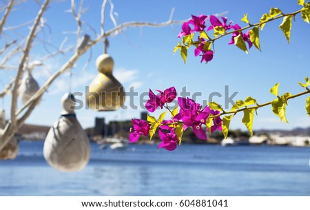 Bougainvillea flower. Yachts, handmade lamps made of water pumpkin (Calabash), Aegean sea and Bodrum castle are in the background. Image shows Aegean lifestyle and culture.