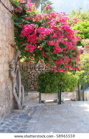 bougainvillea growing against stone wall in an old Mediterranean town