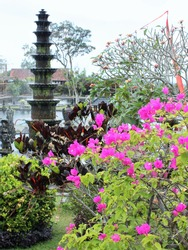 Bougainvillea plant with garden and pond in the background, Bali, Indonesia