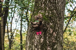 bough shaped like a face on a tree trunk. snag with eyes and bow-tie. Funny nature object