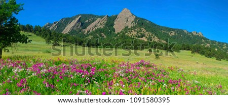 Boulder Colorado Iconic Flatirons with Foreground of Sweet Pea Blossoms #1091580395