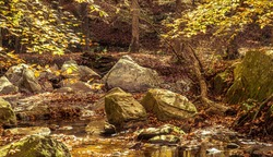 Boulders Have Partially Filled a Shallow Creek lined with Branches Covered with Bright Yellow Leaves