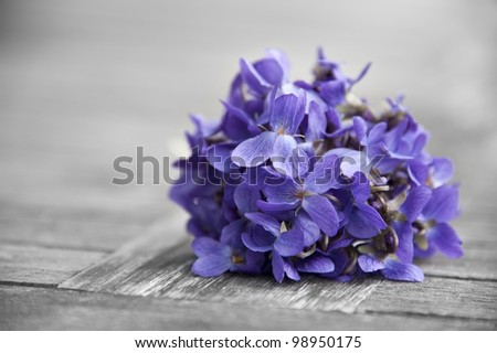 bounch of spring violets - stock photo