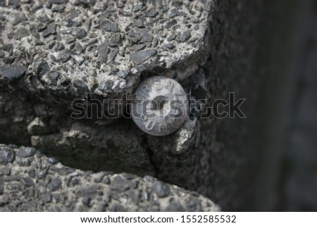 Boundary marker on a stone slab #1552585532
