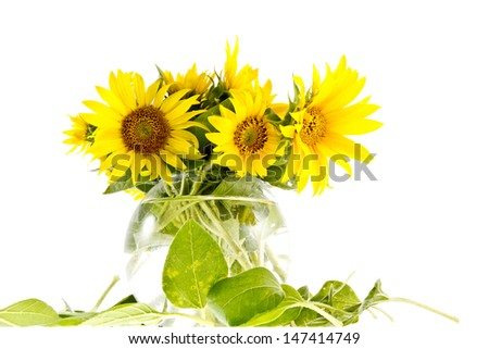 Bouqet of young yellow sunflowers in a vase with water isolated on white.
