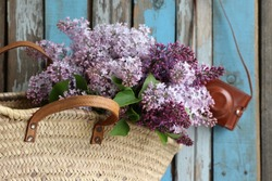 Bouquet, bunch of lilac in vintage authentic wicker farm basket , french style, leather case for camera on blue and grey weathered, aged wooden background, floral composition, daylight, original photo