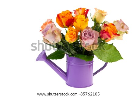 Bouquet colorful roses in watering can isolated over white background