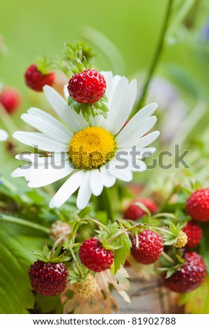 Bouquet from a camomile and wild strawberry