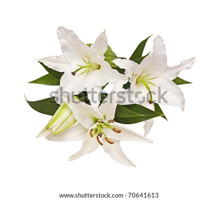 Bouquet from lilies, a flower