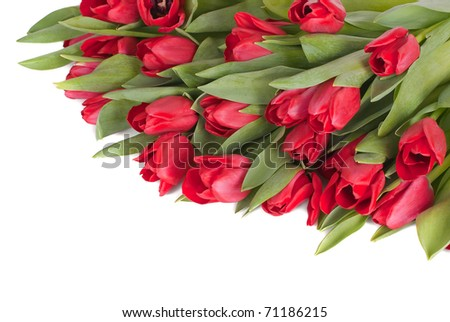 Bouquet from spring tulips on a white background