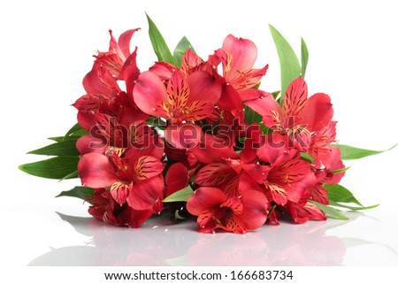 Bouquet from the red flowers, isolated on a white background.