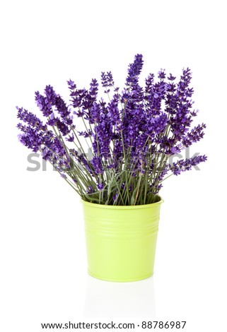 Bouquet lavender in pot over white background - stock photo
