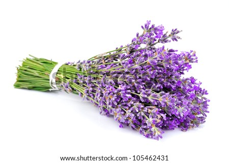 Bouquet of a fragrant lavender on a white background