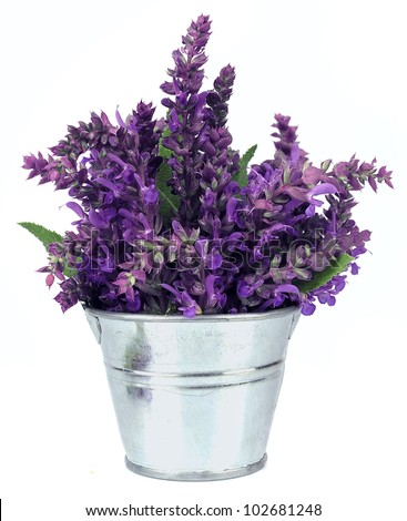 Bouquet of a fragrant sage