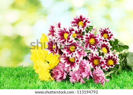 bouquet of beautiful chrysanthemums on bright green background close-up