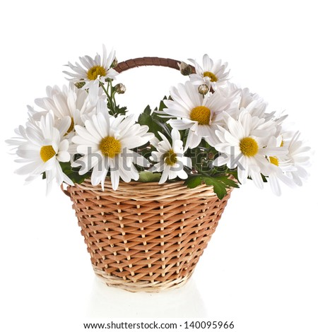 bouquet of beautiful daisies flowers in a basket isolated