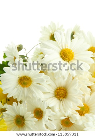 bouquet of beautiful daisies flowers, isolated on white