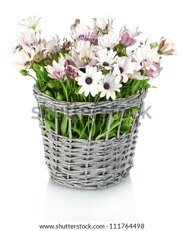 bouquet of beautiful summer flowers in wicker vase, isolated on white