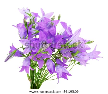 bouquet of bell flowers