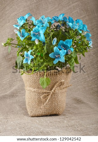 bouquet of blueflowers on natural linen canvas texture backdrop with copy space for text