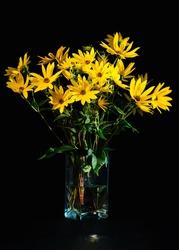 Bouquet of bright fresh yellow flowers on black background. Jerusalem artichoke flowers in glass transparent vase. Low key. Vertical orientation