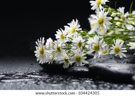 bouquet of chrysanthemum with black stones on water-drops background