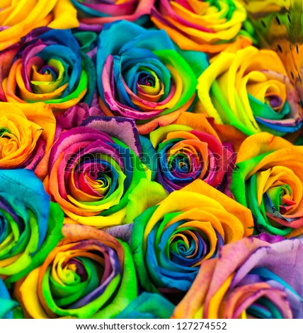 Stock Photo bouquet of colored roses (Rainbow rose)